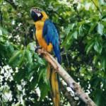 Navigando il Rio delle Amazzoni