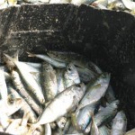 Pesca scarsa